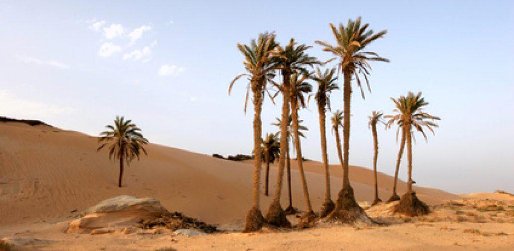 Tunesien: Urlaub in einer luxuriösen Ferienanlage