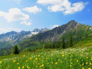 Blumenwiese im Hochgebirge