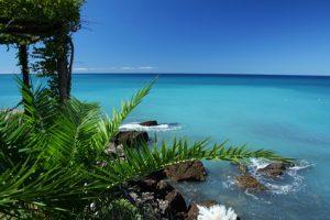 Strandaufnahme mit einer Palme von Barbados