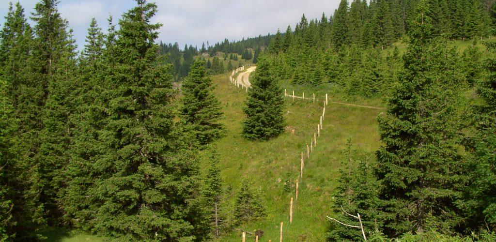 Nationalparks in Deutschland – der Natur so nah