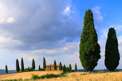 Ferienanlagen in der toskana im sonnigen garten italiens - Toskana garten ...