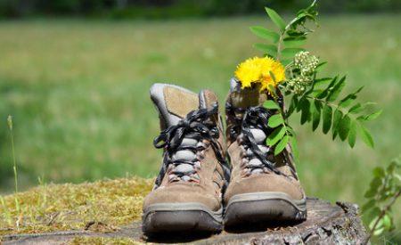 Über Stock und Stein – Outdoorurlaub im Pfälzerwald